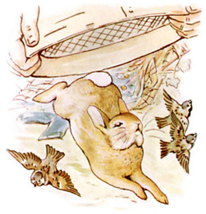 Illustration from the classic children's story The Tale Of Peter Rabbit, by Beatrix Potter